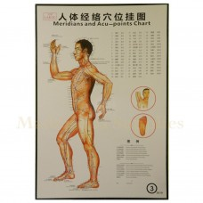 35213 Body Meridians and Acupuncture Points Chart 3