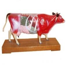 AM107 Cow Model