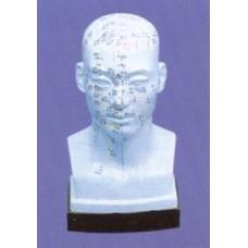 AM101 Head Model