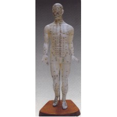 AM102 Human Body Model (19 inches)