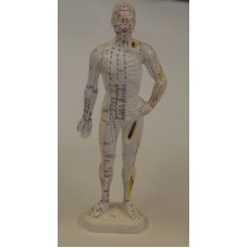 AM103 Human Body Model (11 inches)