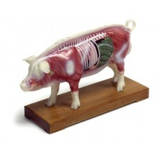 AM106 Pig Model